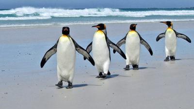 Más de la mitad de los pingüinos del mundo está en peligro de extinción