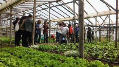 """""""El manejo agroecológico en la horticultura es hoy una opción económicamente viable"""""""