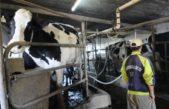 Desde Agroindustria buscan recuperar el sector tambero