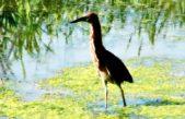 Protección de los humedales: una decisión política e histórica en beneficio de Escobar y la Provincia