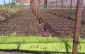 La Plata\ El Municipio avanza con un proyecto que busca regular la actividad hortícola de la ciudad