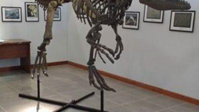 Monte Hermoso / Incorporaron un dinosaurio del período jurásico al museo de ciencias