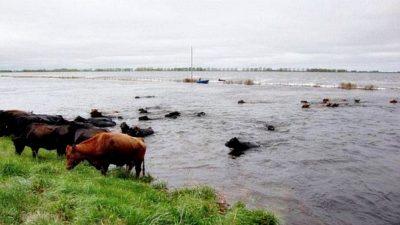 """Cambiemos impulsa una nueva ley de emergencia agropecuario con un """"seguro multirriesgo"""""""