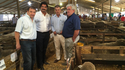 Provincia busca fomentar la producción y consumo de carne ovina