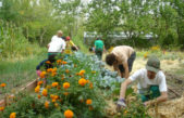 El INTA dicta cursos de huerta agroecológica para docentes