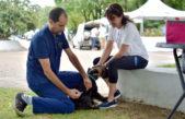 La Plata / realizan jornadas de vacunación gratuita de mascotas