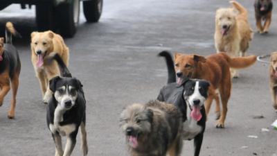 Monte Hermoso / Se viene la primera castración masiva gratuita de caninos y felinos del año