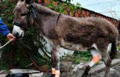 La Plata / Rescatan a un burro abandonado gracias a una denuncia vecinal