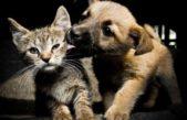 San Nicolás / operativo de castración y vacunación de mascotas en el Barrio Trípoli