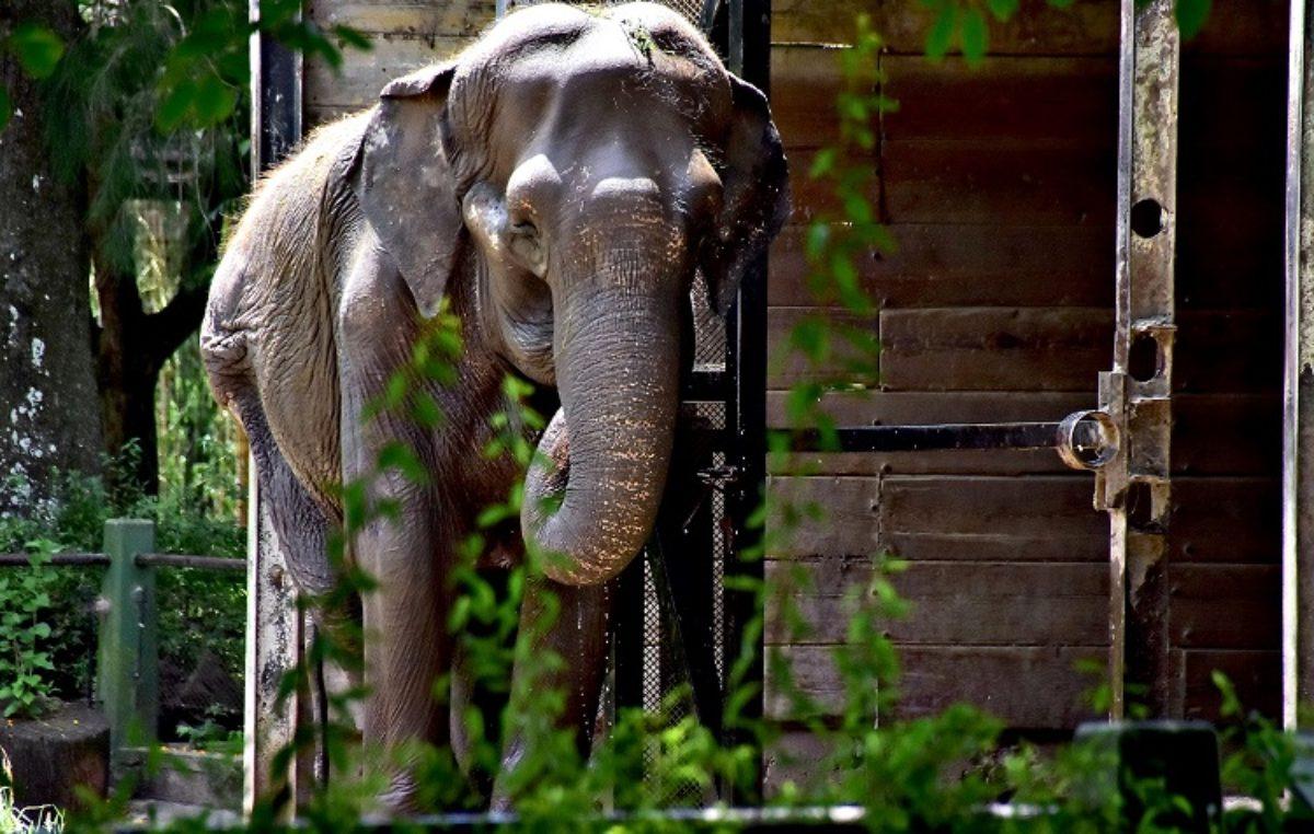 El Defensor del Pueblo se sumó al reclamó por la salud de la elefanta Pelusa