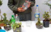 """Ituzaingó: """"Eco Canje"""" entregas plásticos, vidrios y metal y a cambio te llevas un árbol"""