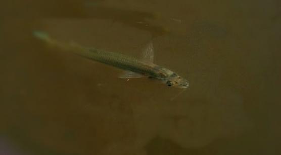 """En el Río de La Plata encontraron peces contaminados con """"microplásticos"""""""