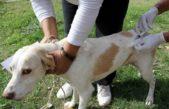 Monte Hermoso lanzó la 24º campaña de vacunación antirrábica gratuita