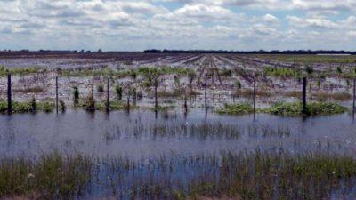 """Construyen un """"tapón"""" para evitar inundaciones en Guaminí y Adolfo Alsina"""