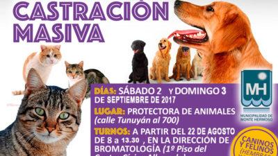 Abrió la inscripción para una nueva campaña masiva de castración de perros y gatos