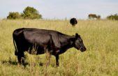 Pellegrini armará un Fondo Rotatorio con 500 mil pesos para financiar a pequeños productores ganaderos