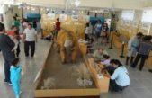 Celebra sus 40 años el Museo de Ciencias de Monte Hermoso