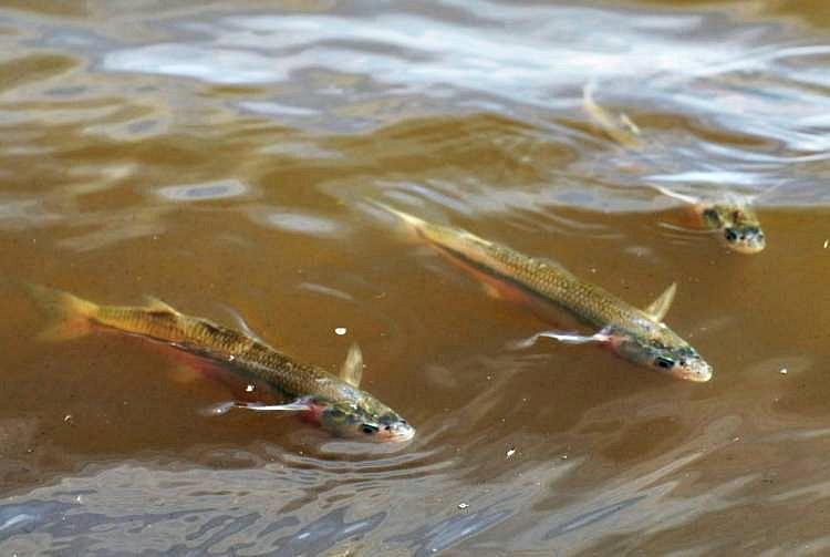 Comenzó la veda de pesca de pejerrey en toda la Provincia
