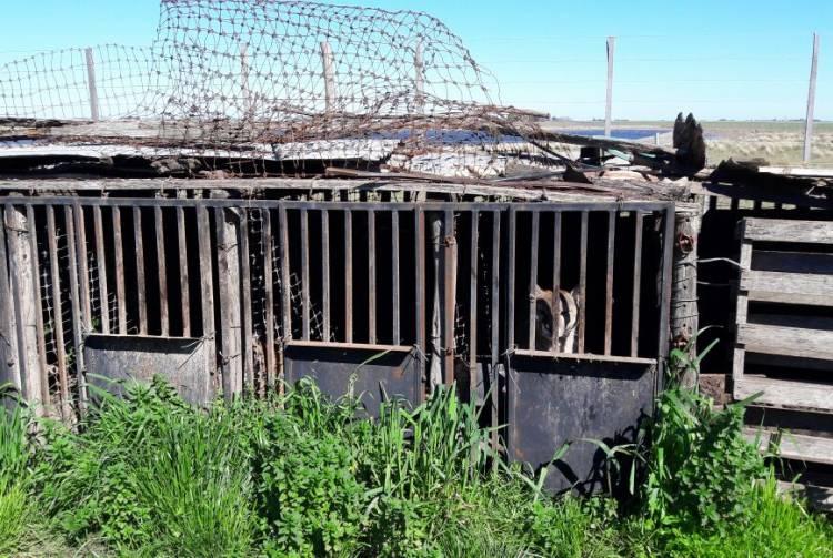 Rescataron a pumas y ciervos exóticos enjaulados en malas condiciones en Guaminí