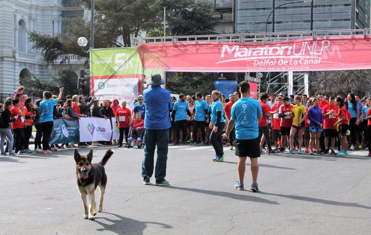 Unas 6 mil personas dijeron presente en la Maratón solidaria de la UNLP