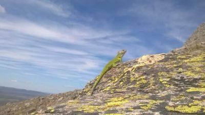 """La Provincia declaró  """"Monumento Natural"""" a dos reptiles nativos en peligro de extinción"""