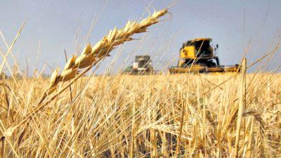 La Provincia busca colocar más trigo en el mercado brasileño