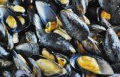Se decretó la veda para la extracción y consumo de moluscos por Marea Roja