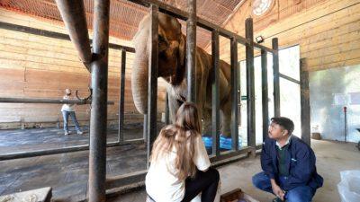 Un experto hindú llegó a La Plata para determinar si la elefanta Pelusa puede ser trasladada a Brasil