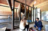 La Plata / un experto indió aconsejó comenzar a preparar el traslado de la elefanta Pelusa a Brasil