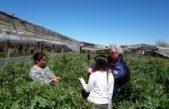 """""""Ventanilla Única"""" el sistema que unifica y facilita los trámites para la formalización de agricultores familiares bonaerenses"""