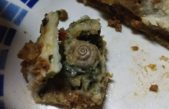 B. Blanca / Escándalo por la aparición de un caracol en un plato de comida en el Hospital Penna