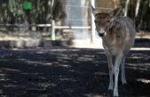La Plata / El Municipio liberó animales de la República de los Niños y el Bioparque