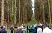Anuncian fondos para el desarrollo de genética y asistencia técnica de Eucalyptus