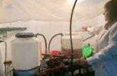Provincia avanza con el Plan de Bioeconomía para incentivar la producción de biodiésel