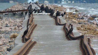 Mirá cómo quedaron las vías del tren San Martín después de la inundación en la Laguna La Picasa