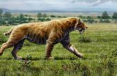Hallaron el cráneo de un tigre dientes de sable a orillas del Río Salado en Junín