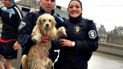 La Plata / La Policía Local rescató a un perro que se había caído al Arroyo El Gato