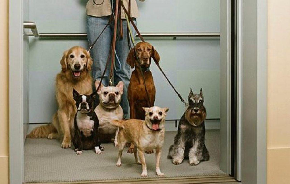 Image result for mascotas en edificios