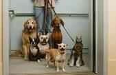 Las mascotas podrán entrar a los edificios públicos de La Plata