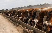 25 de Mayo / El municipio e instituciones agropecuarias trabajan en una ordenanza para desconcentrar los Feed Lots
