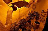 La Universidad de La Plata presentó el primer cultivo científico de marihuana del país