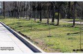 Hipólito Yrigoyen comenzó con la forestación urbana