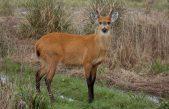 """Avanza la creación del """"Parque Nacional Ciervo de los Pantanos"""" en Campana"""
