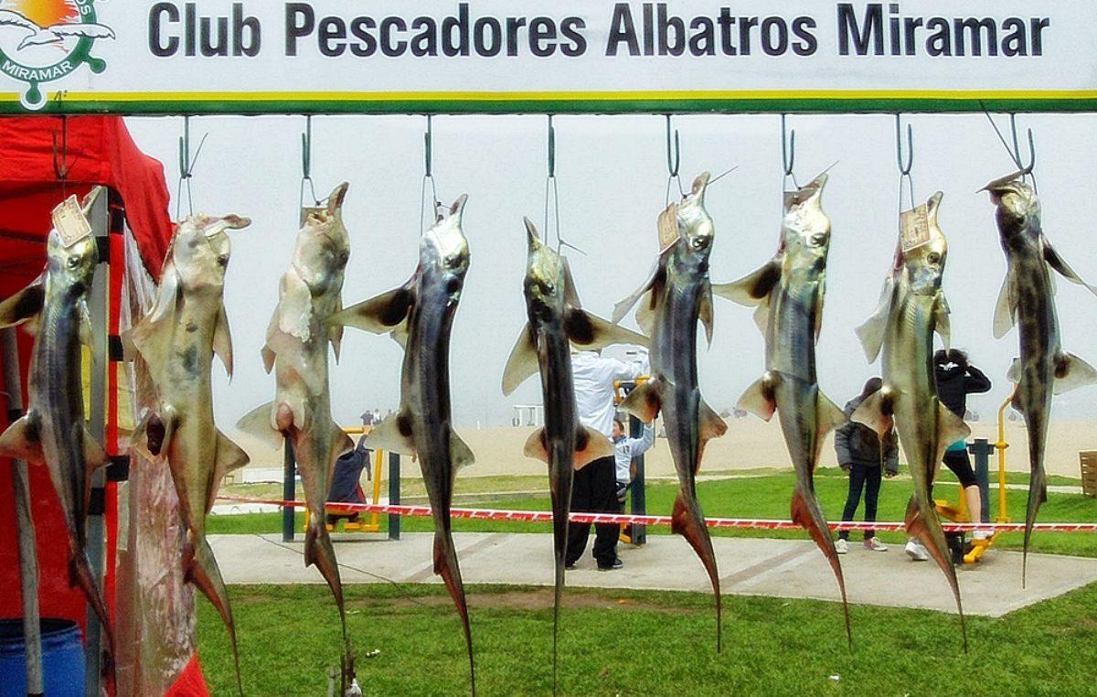 """Se viene el """"Gran Concurso de Pesca del Pez Elefante"""" en Miramar"""