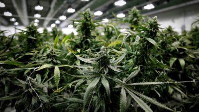 """La Madrid avanza con su proyecto para plantar cannabis medicinal: """"Pusimos a nuestro pueblo en el mapa"""""""