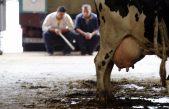 En Rivadavia el massismo esta preocupado por la crisis del sector lechero y quiere que el gobierno regule el precio de la cadena primaria