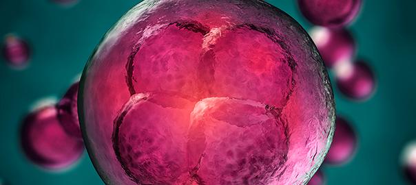 Científicas de La Plata patentaron un novedoso método para regenerar la piel con células madres
