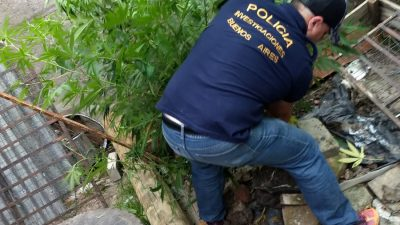 """Un platense llamó al 911 amenazando con una """"masacre en el G20"""": lo allanaron y le sacaron 15 plantas de marihuana"""