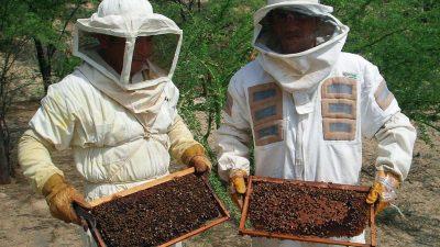 Atención criadores de abejas: Provincia invertirá 5 millones de pesos en nuevos proyectos