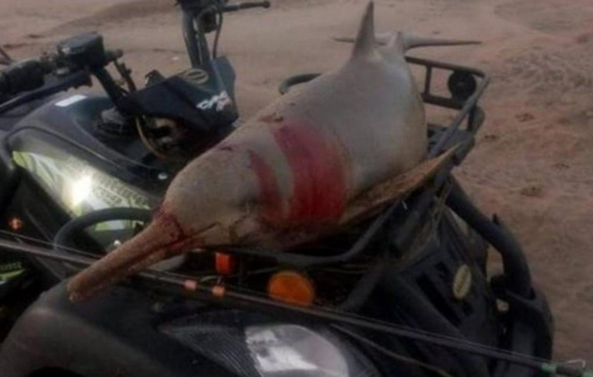 """El OPDS aplicará una multa de """"hasta un millón"""" al hombre que pescó un delfín en Marisol"""
